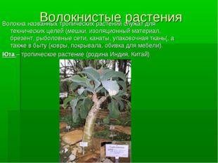 Волокнистые растения Волокна названных тропических растений служат для технич