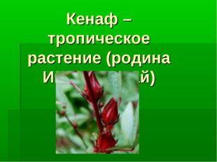 Кенаф – тропическое растение (родина Индия, Китай)