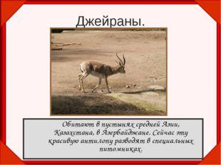 Джейраны. Обитают в пустынях средней Азии, Казахстана, в Азербайджане. Сейча