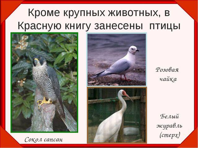 Кроме крупных животных, в Красную книгу занесены птицы Сокол сапсан Розовая ч...