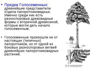 Предки Голосеменных: древнейшие представители отдела папоротниковидных. Именн