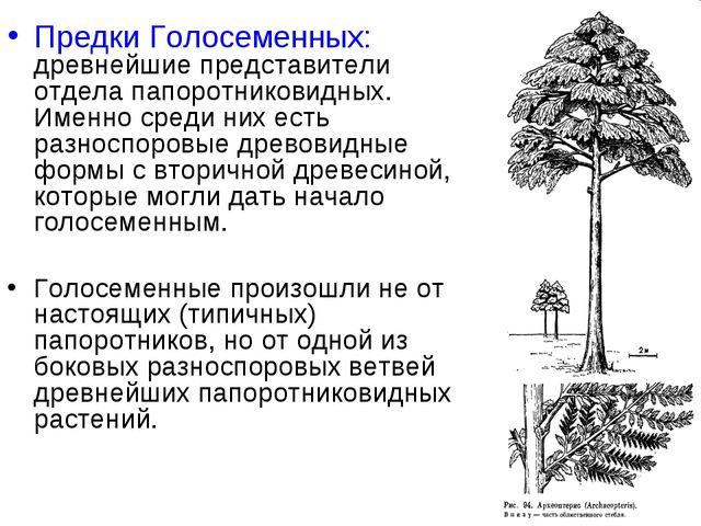 Предки Голосеменных: древнейшие представители отдела папоротниковидных. Именн...