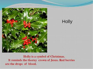 Holly is a symbol of Christmas. It reminds the thorny crown of Jesus. Red be