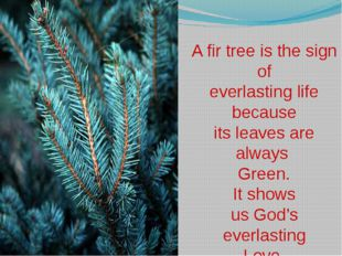 A fir tree is the sign of everlasting life because its leaves are always Gre