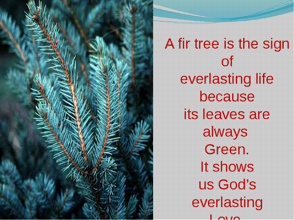 A fir tree is the sign of everlasting life because its leaves are always Gre...