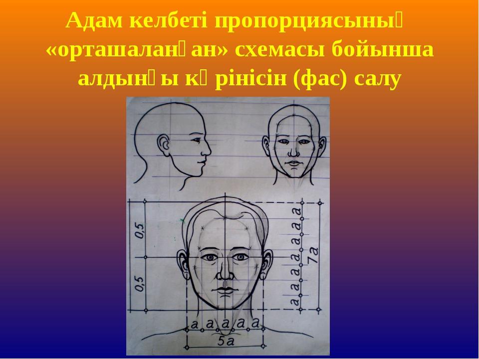 Адам келбеті пропорциясының «орташаланған» схемасы бойынша алдынғы көрінісін...