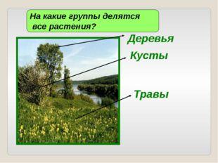 Деревья На какие группы делятся все растения? Кусты Травы