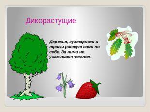 Дикорастущие Деревья, кустарники и травы растут сами по себе. За ними не ухаж