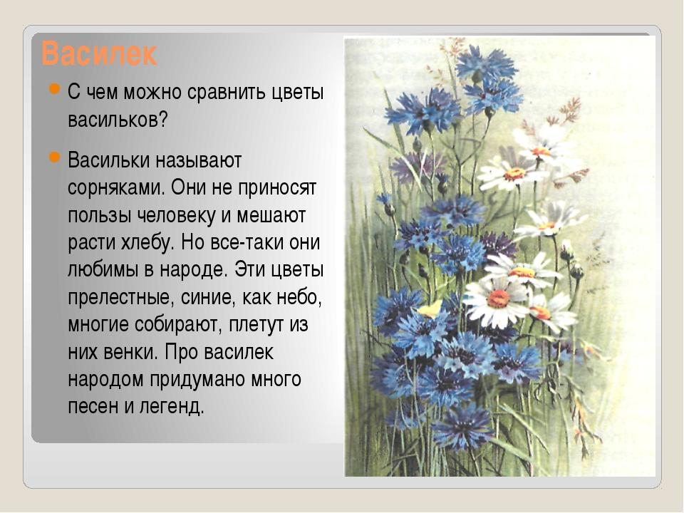 Василек С чем можно сравнить цветы васильков? Васильки называют сорняками. Он...