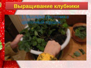 1. Высадка растения в цветочный горшок. ProPowerPoint.Ru