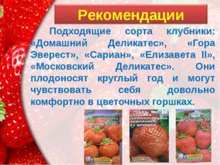 Подходящие сорта клубники: «Домашний Деликатес», «Гора Эверест», «Сариан», «