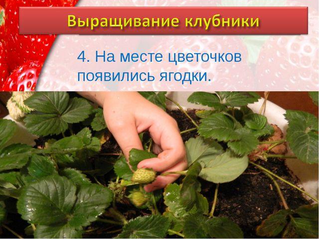 4. На месте цветочков появились ягодки. ProPowerPoint.Ru