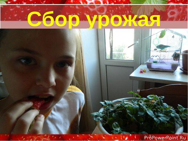 Сбор урожая ProPowerPoint.Ru