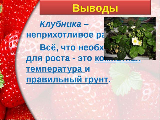 Клубника – неприхотливое растение. Всё, что необходимо для роста - это комн...