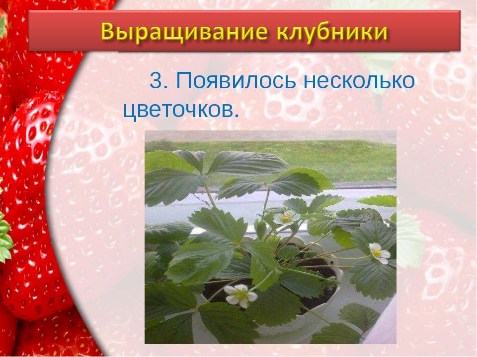 3. Появилось несколько цветочков. ProPowerPoint.Ru