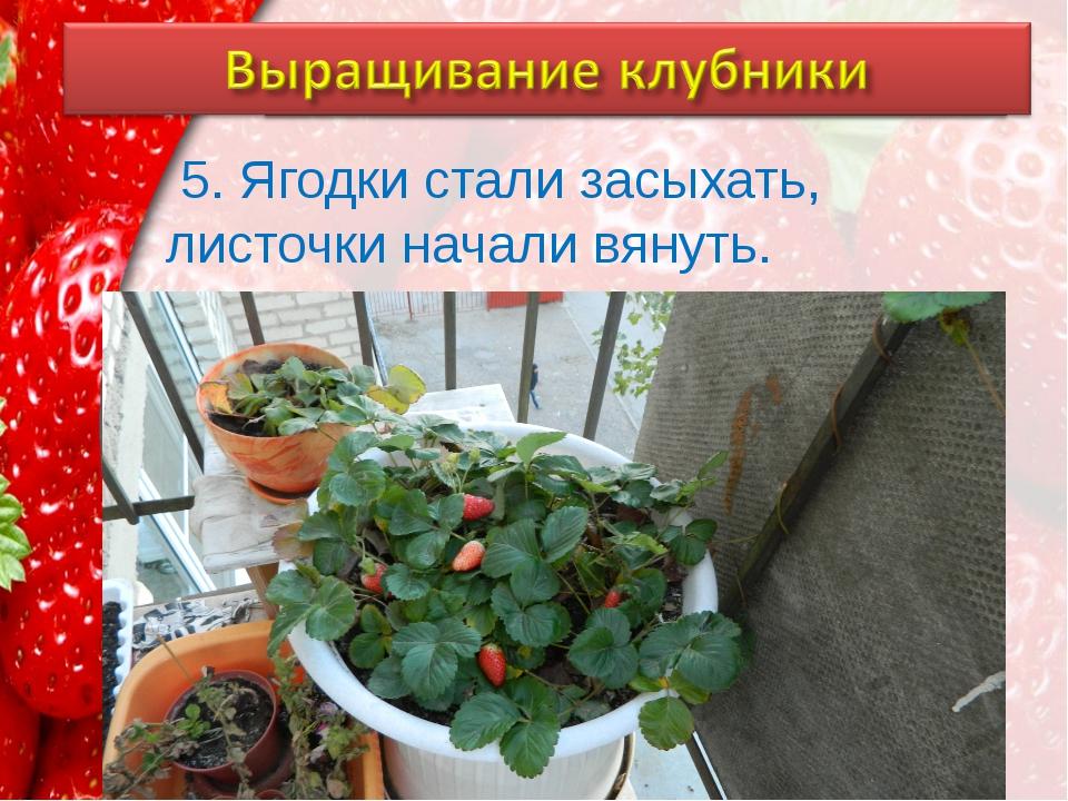 5. Ягодки стали засыхать, листочки начали вянуть. ProPowerPoint.Ru