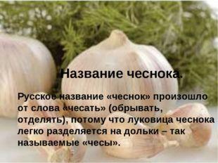 Название чеснока. Русское название «чеснок» произошло от слова «чесать» (обры