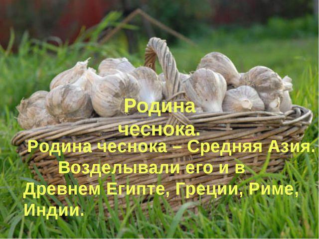 Родина чеснока. Родина чеснока – Средняя Азия. Возделывали его и в Древнем Ег...