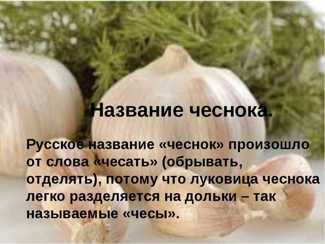 Название чеснока. Русское название «чеснок» произошло от слова «чесать» (обры...