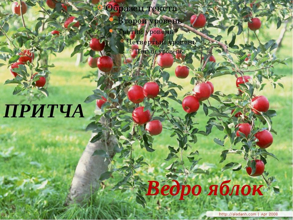 ПРИТЧА Ведро яблок
