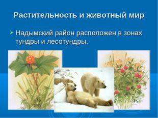 Растительность и животный мир Надымский район расположенв зонах тундрыи лес