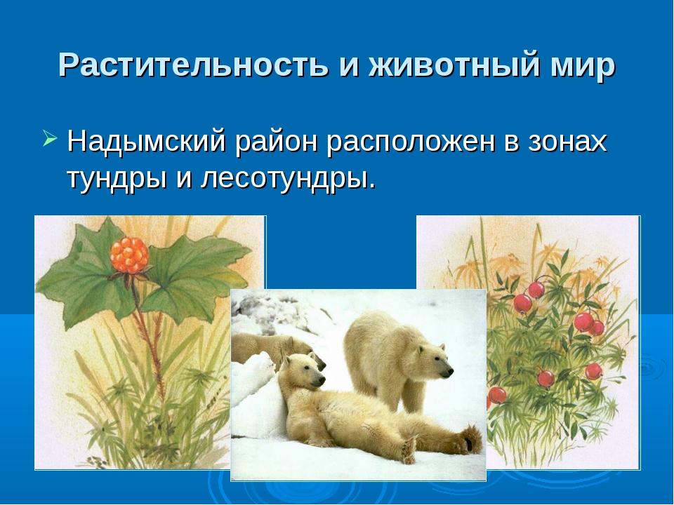 Растительность и животный мир Надымский район расположенв зонах тундрыи лес...