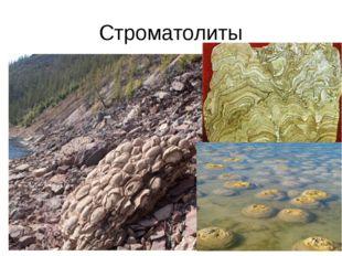 Строматолиты