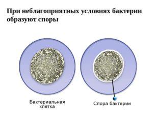 При неблагоприятных условиях бактерии образуют споры