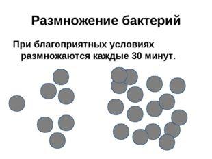 Размножение бактерий При благоприятных условиях размножаются каждые 30 минут.