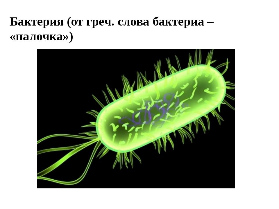 Бактерия (от греч. слова бактериа – «палочка»)
