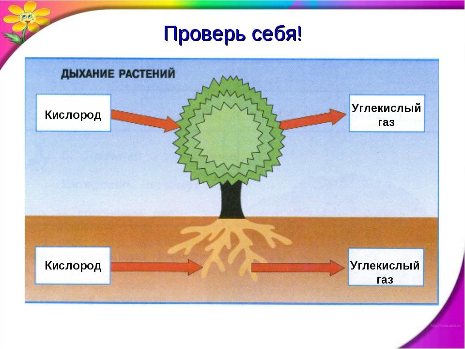 Кислород Углекислый газ Кислород Углекислый газ Проверь себя!