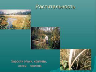 Растительность Заросли ольхи, крапивы, осоки, паслена