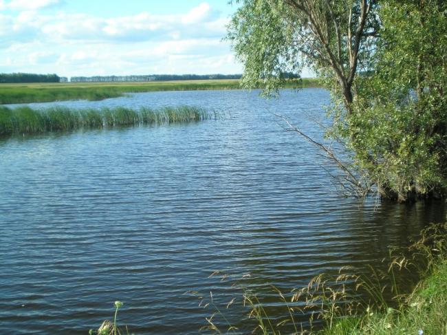 Природа Воронежской области