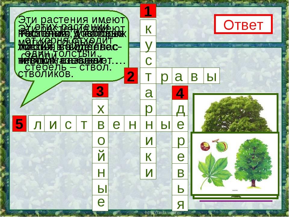 5 3 1 4 2 Эти растения имеют несколько довольно тонких, но одревес- невших ст...