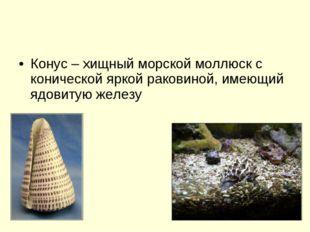Конус – хищный морской моллюск с конической яркой раковиной, имеющий ядовитую