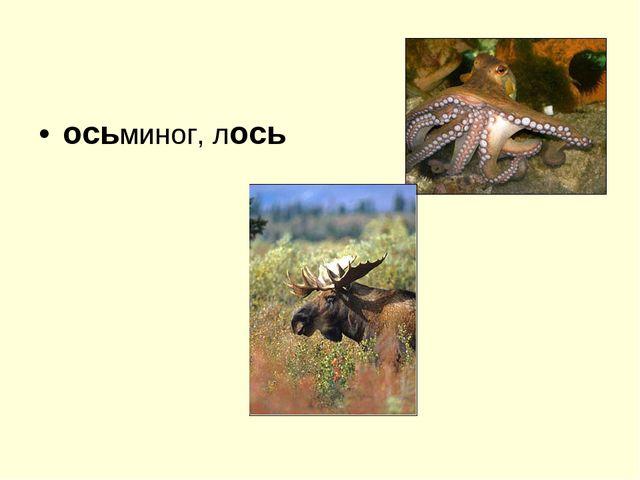 осьминог, лось
