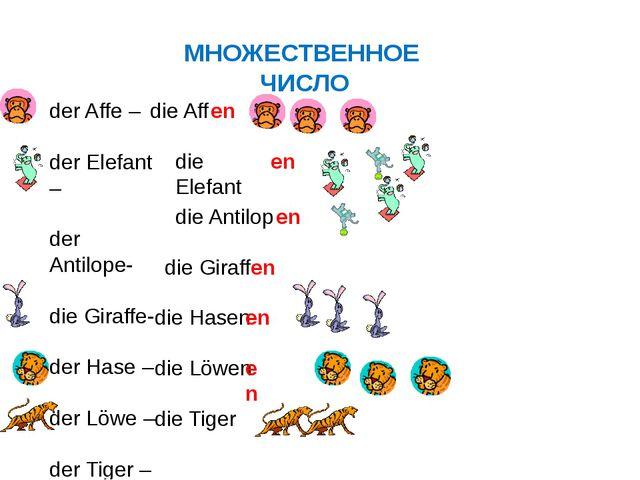 МНОЖЕСТВЕННОЕ ЧИСЛО der Affe – der Elefant – der Antilope- die Giraffe- der H...