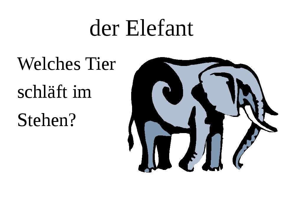 der Elefant Welches Tier schläft im Stehen?