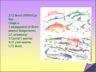 2.Сүйекті-20000түрі бар. Оларға: 1 шеміршекті-сүйекті немесе бекіретектес 2.Қ