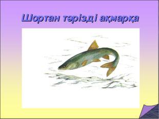 Шортан тәрізді ақмарқа