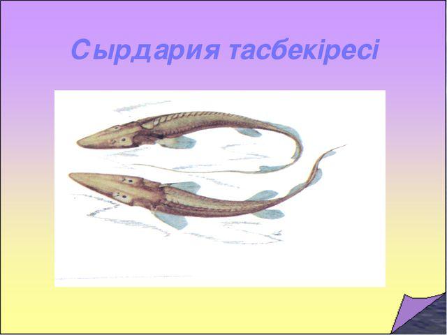 Сырдария тасбекіресі
