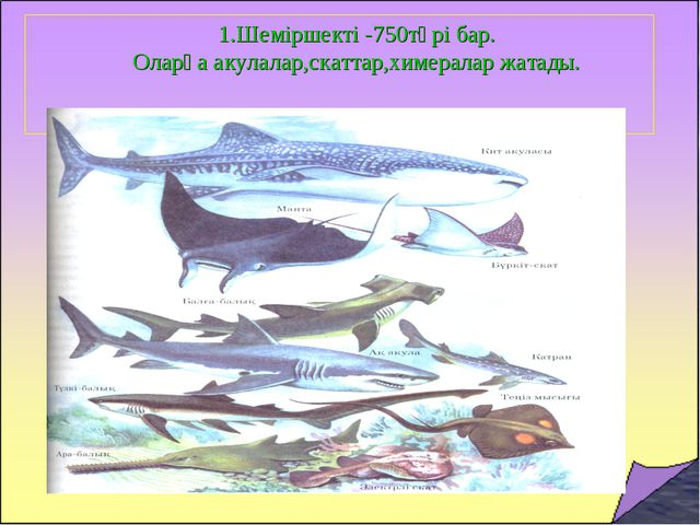 1.Шеміршекті -750түрі бар. Оларға акулалар,скаттар,химералар жатады.