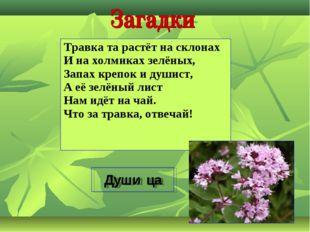 Травка та растёт на склонах И на холмиках зелёных, Запах крепок и душист, А е