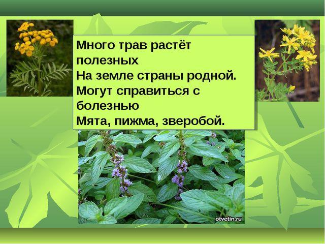 Много трав растёт полезных На земле страны родной. Могут справиться с болезнь...