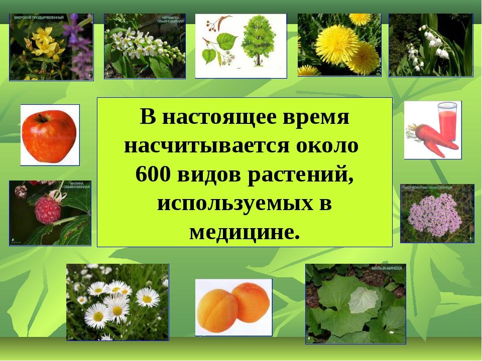 В настоящее время насчитывается около 600 видов растений, используемых в меди...