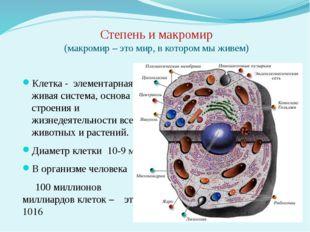Степень и макромир (макромир – это мир, в котором мы живем) Клетка - элемента