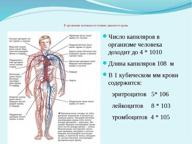 В организме человека постоянно движется кровь Число капиляров в организме че...