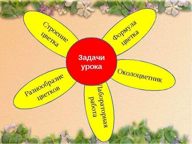 Лабораторная работа Формула цветка Разнообразие цветков
