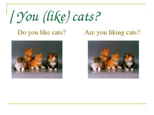 [ You (like) cats? Do you like cats? Are you liking cats?