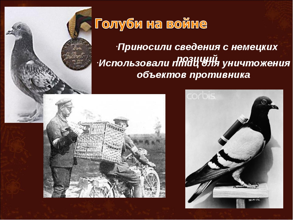 Приносили сведения с немецких позиций Использовали птиц для уничтожения объек...